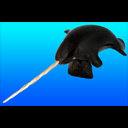 Breaching Narwhal